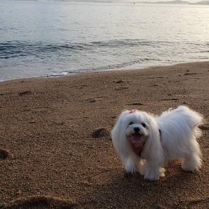 夏の思い出~海!楽しかった!~
