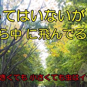 初めての散歩コース(一人暮らし快適化計画)