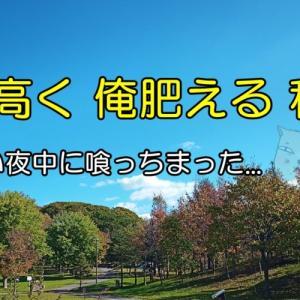 サーバーいじったらout (*´Д`)(おやじの恋快適化計画)