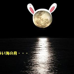 夜の岬にホッケをナンパしに行った時事件は起きた(おやじの恋快適化計画)