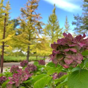 ~木々の色づき始め~ 昼休みに秋の散歩