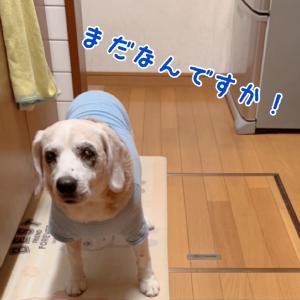 頭痛ーる(気象病)