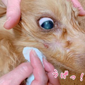 皮膚腫瘍の経過