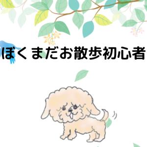 子犬のお散歩デビュー