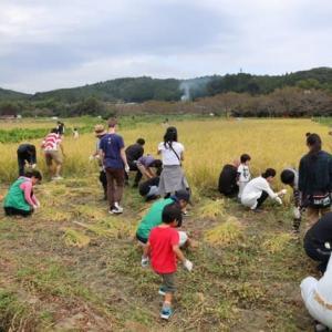 2019-10-6-おそき田んぼ稲刈り