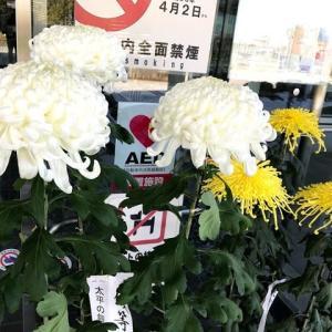 2019-11-5あきる野市長杯菊展