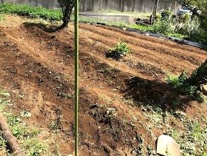 2020-9-11-秋野菜の準備ー畝作り