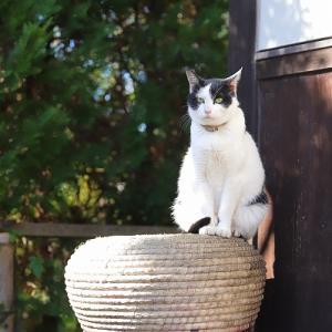 猫まみれのお寺。
