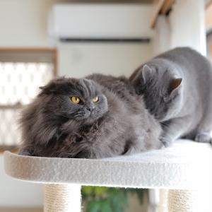 今シーズンの猫団子は諦めた。