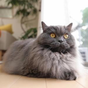 広角で猫を撮る