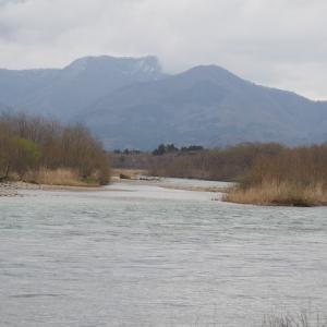 三面川2回目釣行 水明橋上流