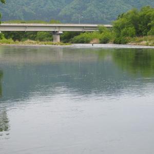 三面川5回目釣行 高速上流