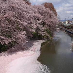 桜を求めて米沢・山形城へ 夫婦で全線完乗 2013年4月 米沢-1