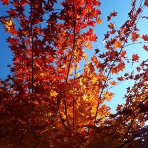 まだまだ秋真っ盛り〓お散歩レポート♪