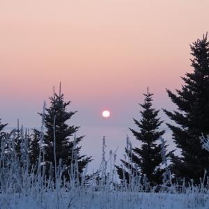 やっと冬らしい景色に成りました