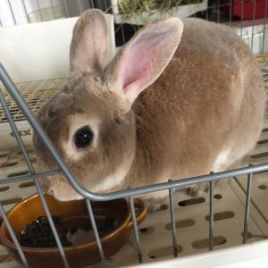 元気すぎるシニア・ウサギ