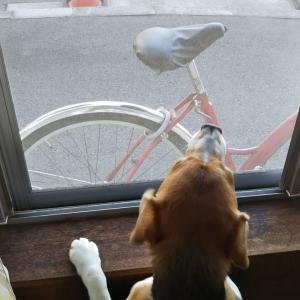 平和を守る人と犬