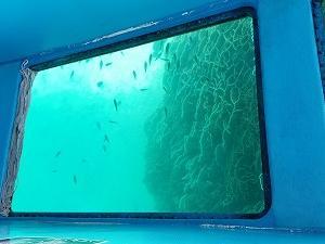 竜串の奇岩と海中散歩『グラスボート』