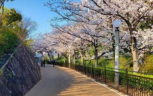 桜を愛でながら大坂の冬・夏の陣を偲ぶ『天王寺公園』
