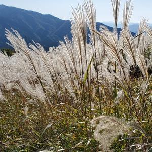 つつじにすすきに樹氷まで。四季毎に違った魅力が満載の『葛城高原』