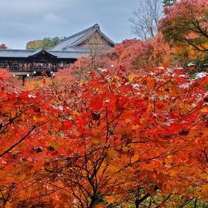 京都でナンバーワン紅葉スポット『東福寺』