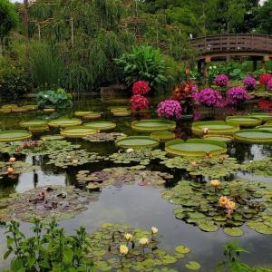 オオオニバスの織り成す幻想的な雰囲気『草津市立水生植物公園 みずの森』