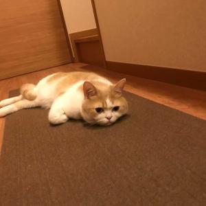雨田甘夏、脚パンパンです。