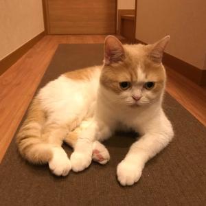 雨田甘夏、レッドホットチキンです。