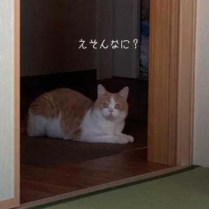 雨田甘夏、お裾分けです。