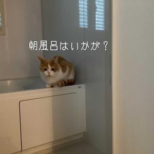 雨田甘夏、お任せです。