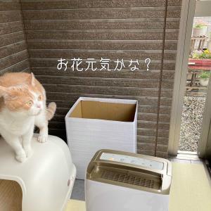 雨田甘夏、おちょぼ口です。
