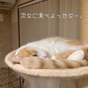 雨田甘夏、むせそうです。