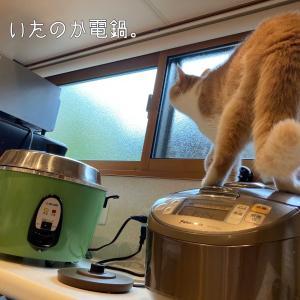 雨田甘夏、大活躍です。