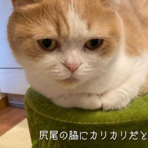 雨田甘夏、先入観です。