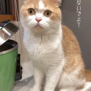 雨田甘夏、小心です。