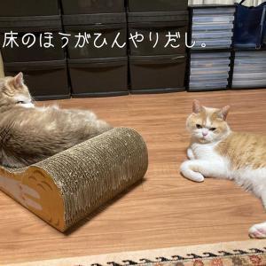 雨田甘夏、ブッシュです。