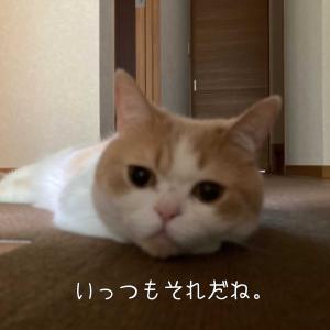 雨田甘夏、紐なしです。
