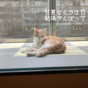 雨田甘夏、リズムです。