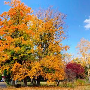 【はじめての秋】心も潤う自然のシャワー