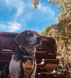 Ocean Mesa RV camping