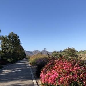 カリフォルニアの青い空って.......