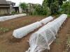 庭の野菜畑2020