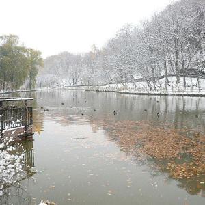 2019/11/15  雪 月寒公園