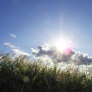 ススキと空と太陽と。