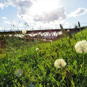 綿毛の秋、橋のある風景。