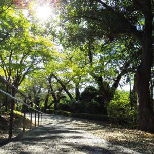 秋の陽、さんぽ道。