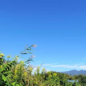 秋天に咲き、まだ蒼い山。