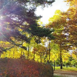 秋彩のひかり。
