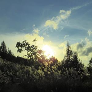ススキ野原の夕暮れ。