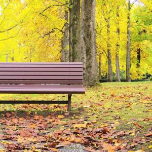 秋彩じかん。